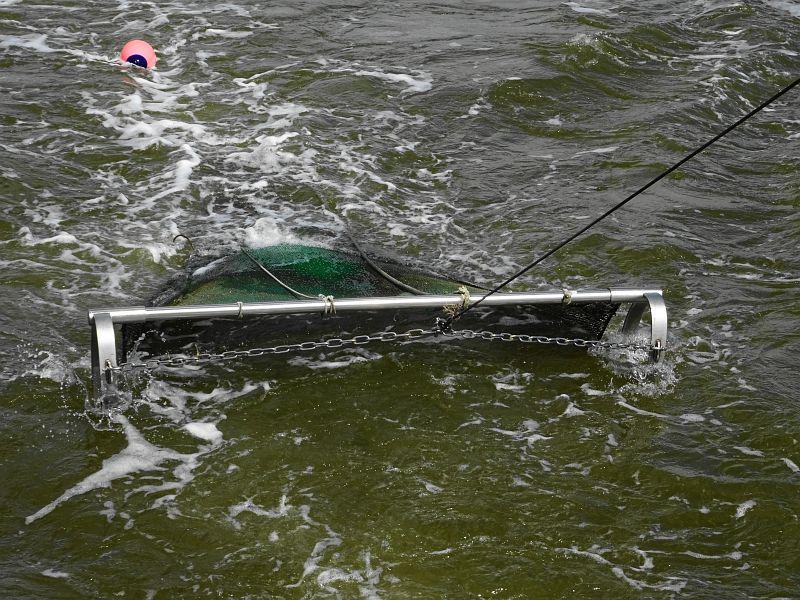Eiderfahrt-mit-Seetierfang-auf-der-Adler-2-Fangnetz
