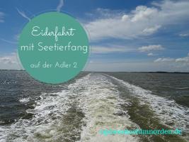 Eiderfahrt-mit-Seetierfang-auf-der-Adler-2